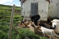 Barbara mit ihren Hühnern