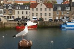 ...Fisherman's Bird