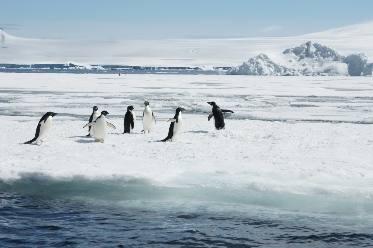 Antarktis 2011
