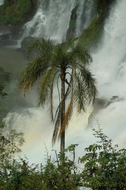 02_Iguazù_6