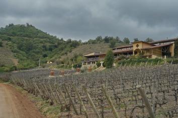 17_Bodega Santa Cruz Chile_1