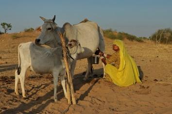 Jodhpur Wüste