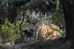 Ranthambore Safari